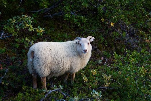 Free stock photo of animal, countryside, cute, farm