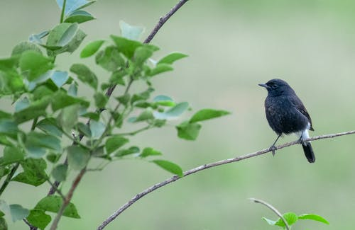 Small black bird sitting on thin twig of bush