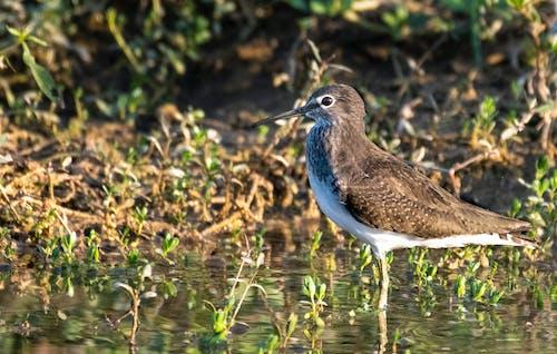 Wild bird in water in swamp