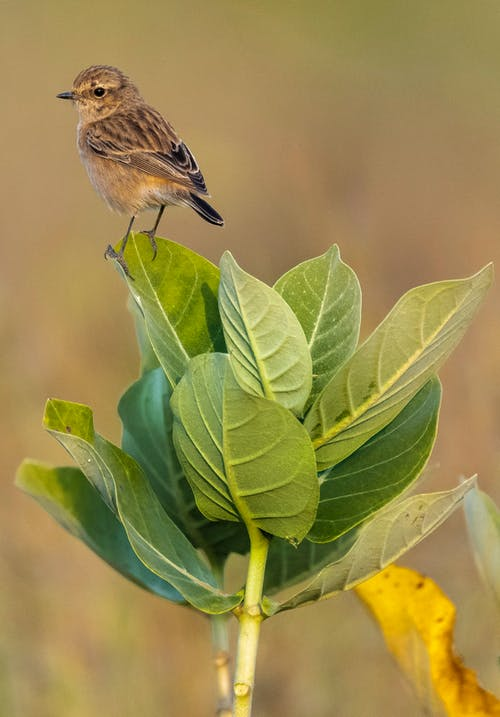 Small bird perching on green leaf