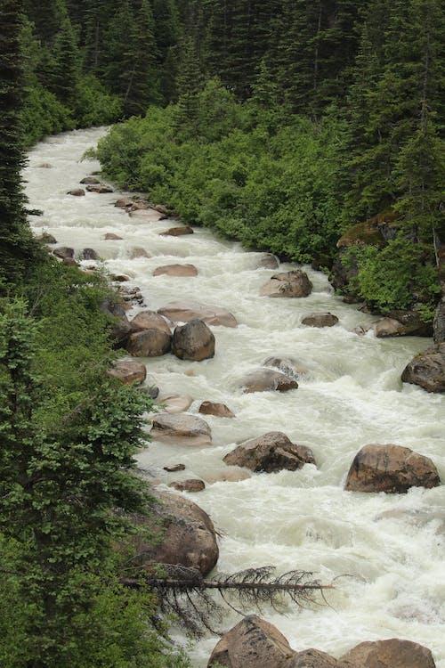 Immagine gratuita di acqua, acqua che scorre, alberi