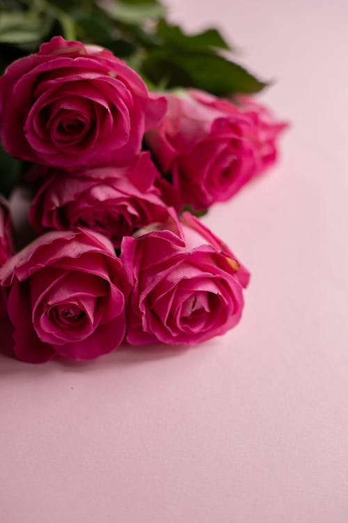 From above of gentle bouquet of fresh roses for Valentines Day on pink background
