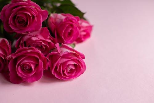 Rosas Rosadas En Superficie Blanca