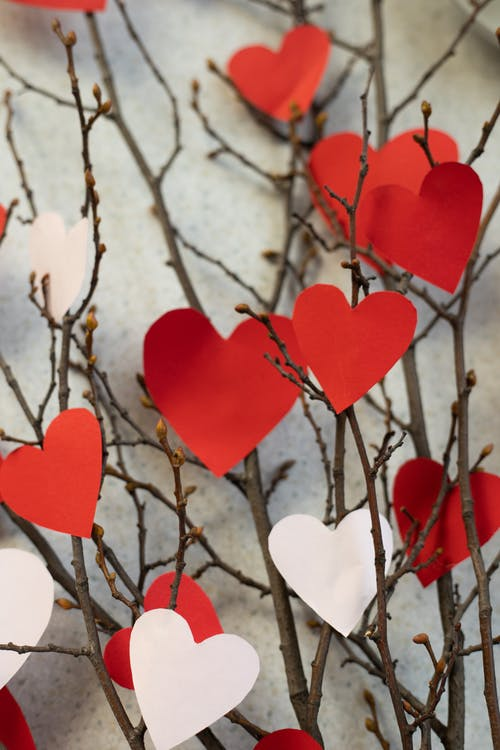 Paper hearts on twigs of tree