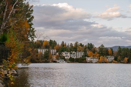 Fotos de stock gratuitas de admirar, agua, al aire libre, árbol