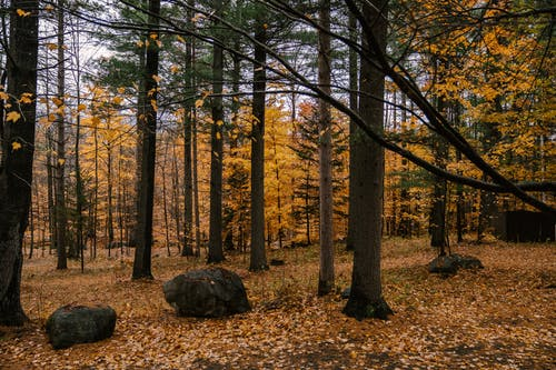 Trees growing in autumnal forest in daytime