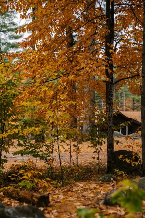 House in autumn woods in countryside