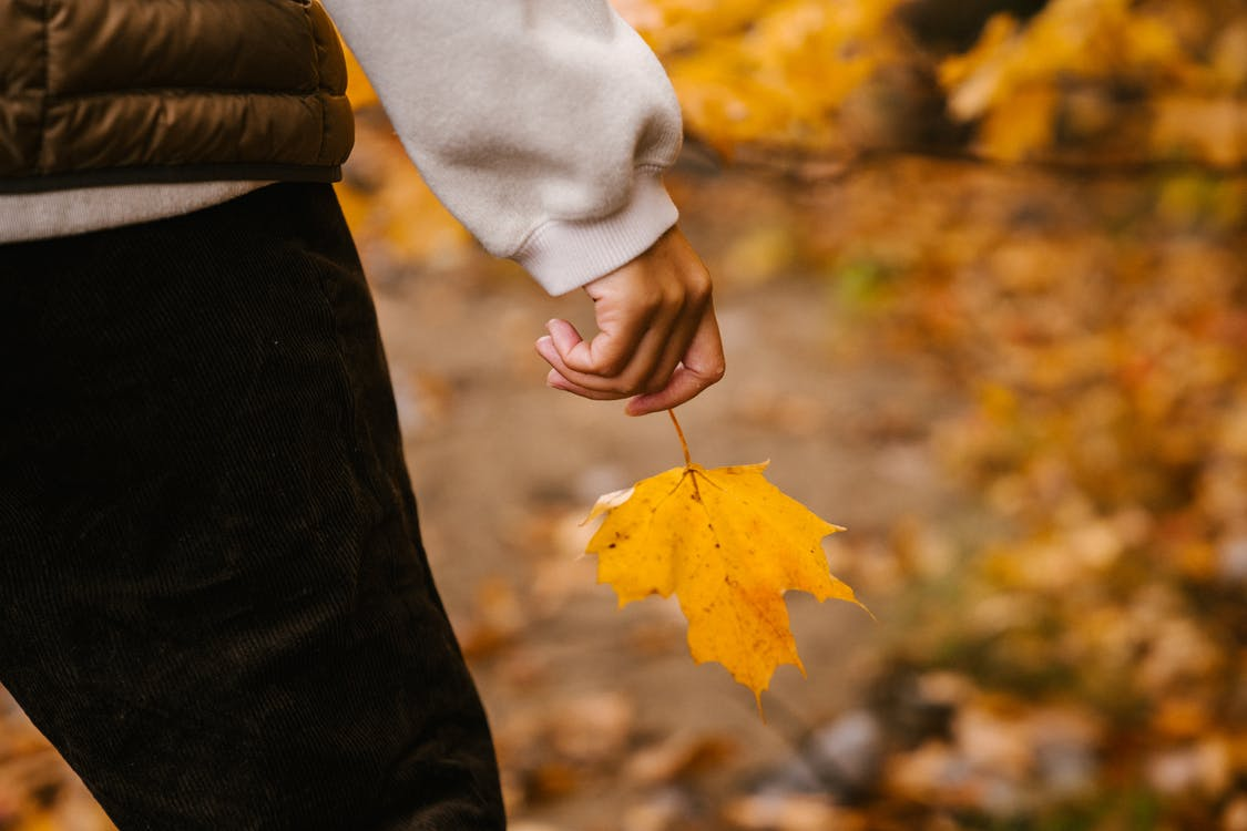 Unrecognizable person in warm clothes with vibrant yellow leaf on maple in hand in autumn forest in daytime on blurred background