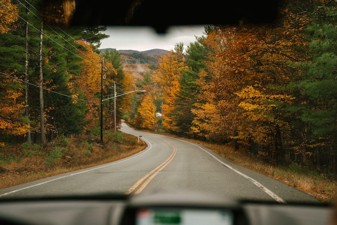 Asphalt road between vibrant trees in daytime