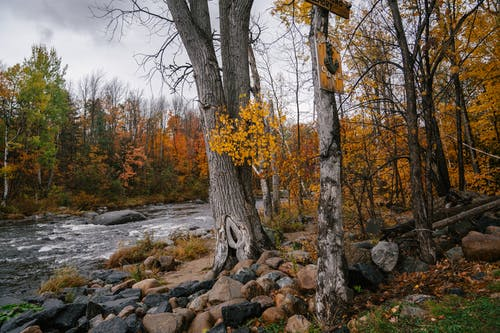 Overcast sky over river in forest