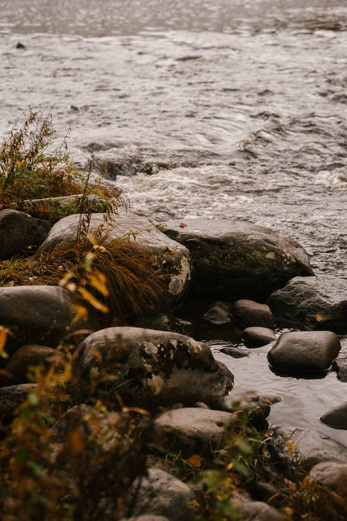 Large dark gray stones and grass on shore of wild river in daylight