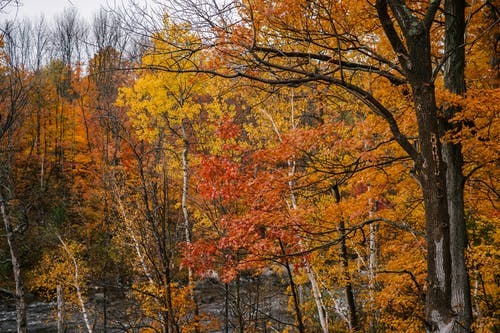 Tall trees with bright multicolored foliage