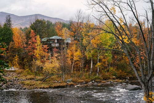 House in lush woodland with multicolored trees on coast of wild river next to mountain valley in autumn