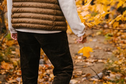 Unrecognizable person in warm clothes holding vibrant leaf of maple while having stroll in autumn forest in daytime on blurred background