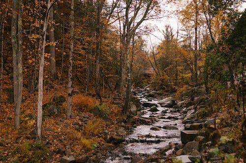 가을, 가지, 강, 개울의 무료 스톡 사진