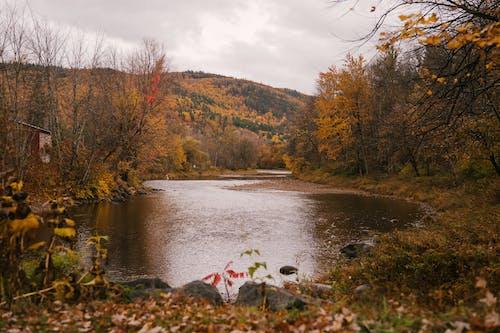 가을, 강, 강변, 경치의 무료 스톡 사진