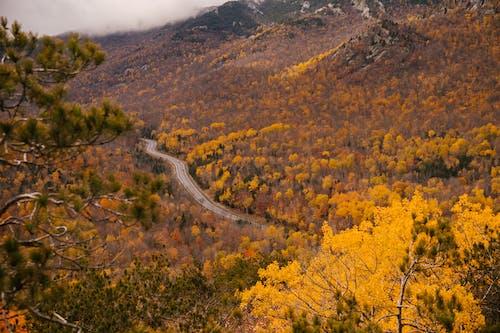 가을, 경로, 경치, 경치가 좋은의 무료 스톡 사진