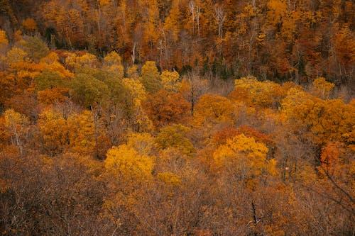 Sarı Ve Yapraksız Ağaçlarla Sonbahar Ormanı