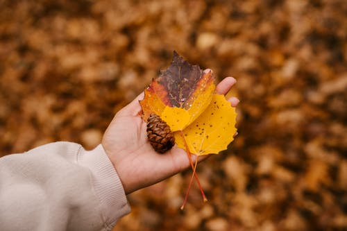 Crop anonymous person holding pine cone and fading leaves on blurred background of autumn park