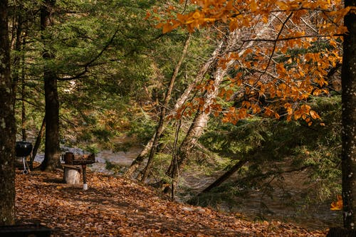 Barbecue on shore of river in autumn forest