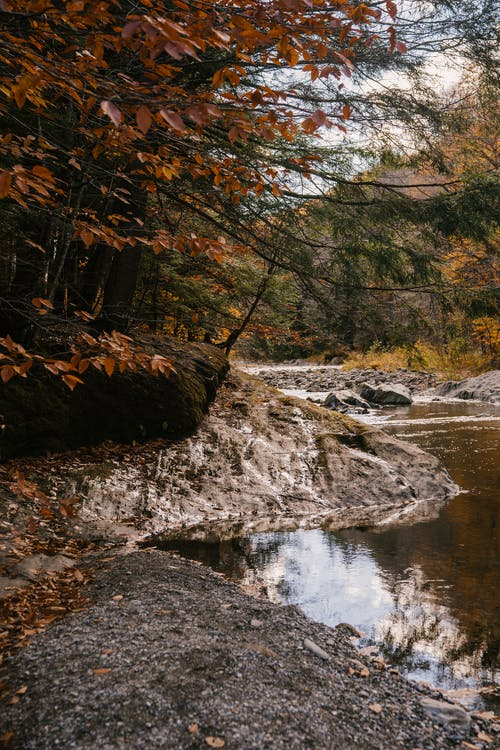 River flowing through stones in forest