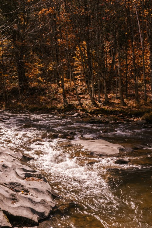 River streaming through stones in autumn forest