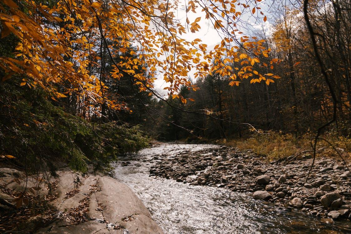 River stream flowing through stony shore