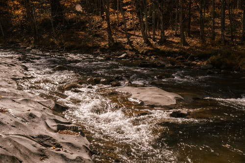 Rapid river flowing through rocky terrain in forest