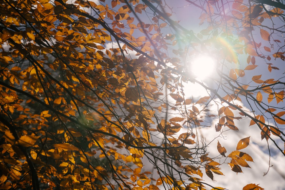 From below of bright rays of sun shining through branches of tree with yellow foliage