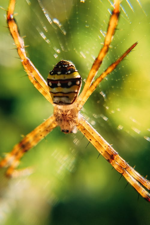 Spider with long thorny legs in web