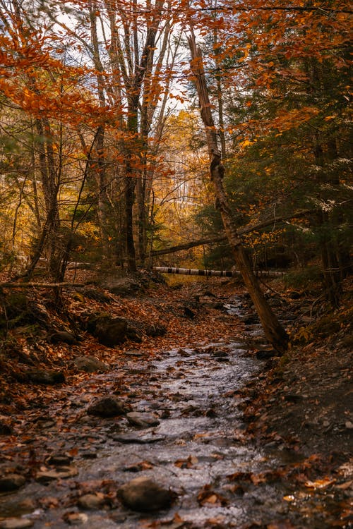 Narrow stream flowing through forest with tall trees and colorful foliage with fallen leaves on ground in autumn day in nature