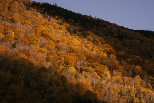 Picturesque scenery of lush trees with yellow leaves growing on slope of hill in forest on autumn day under sunlight
