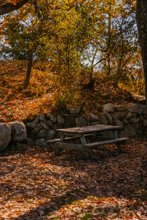 Wooden shabby table in forest with tall trees and fallen leaves on ground and stone barrier in autumn day in nature