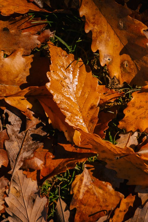 From above pile of dry fallen leaves of tree covering grassy ground in nature on autumn day in rural terrain