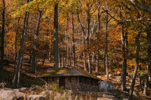 Steinhütte Im Herbstwald