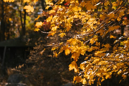 Branches of tree with yellow leaves growing in woods on autumn day in countryside under sunlight on blurred background in nature