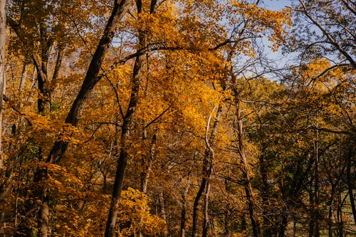 Autumn forest with tall trees