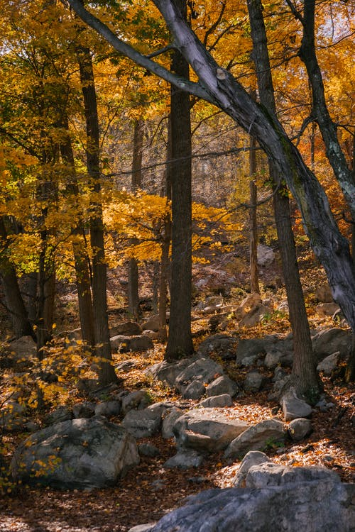Tree growing in autumn forest