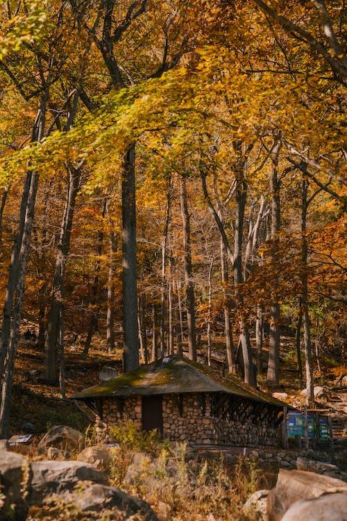 Herbstbäume In Der Nähe Von Steinhaus