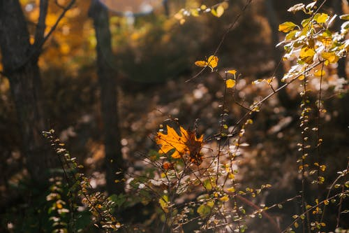 Dry colorful leaf on twig of green plant growing in forest on sunny autumn day on blurred background in nature