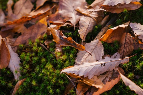 Autumn leaves on green plant