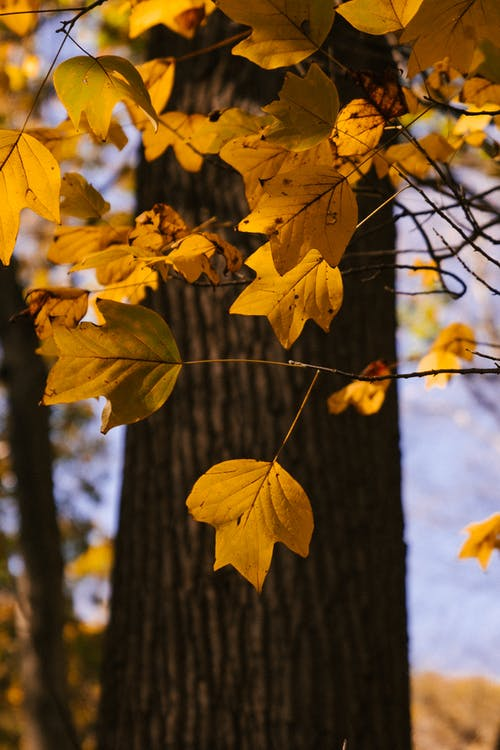 Tree trunk with yellow leaves growing on thin branches growing in forest in nature on autumn day with blurred background