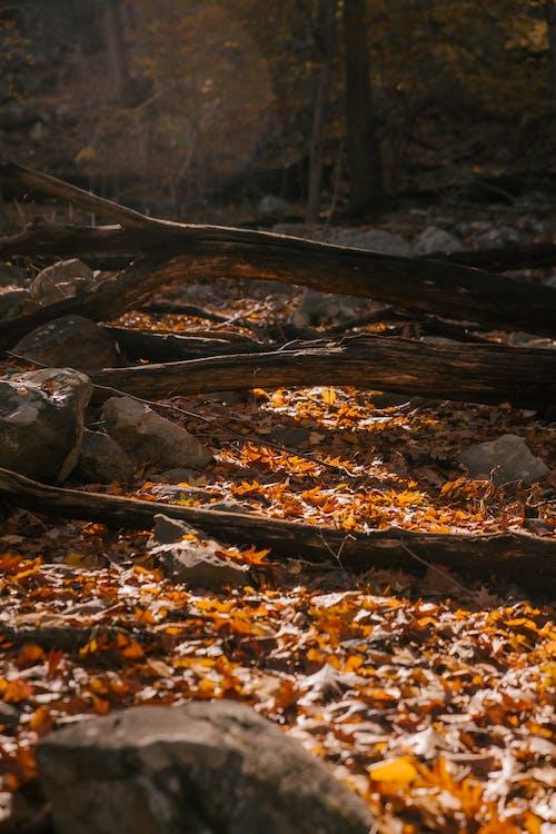 Protokolliert Den Herbstwald Am Boden