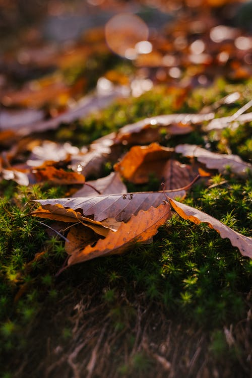 Fallen dry leaves of tree on green blooming shrub in forest on sunny autumn day in nature with blurred background