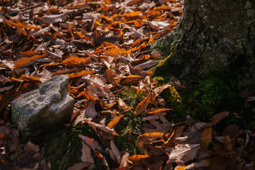 Mossy tree trunk on ground covered with fallen leaves in autumn forest