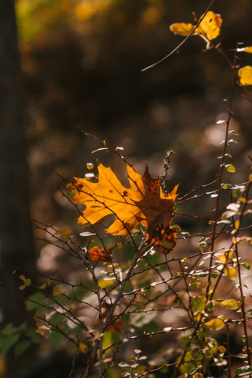 Delicate golden leaf of oak tree fallen on fragile twigs of plant growing in autumn forest on sunny day