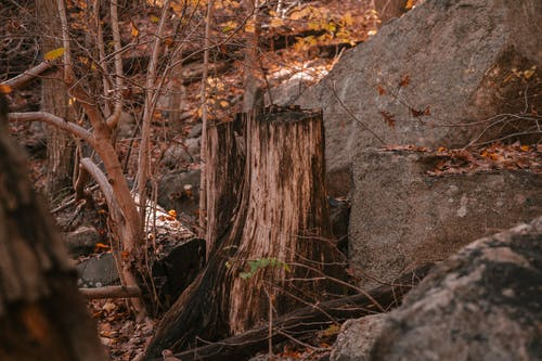High angle trunk of broken tree with leafless branches near rough stones in autumn woods