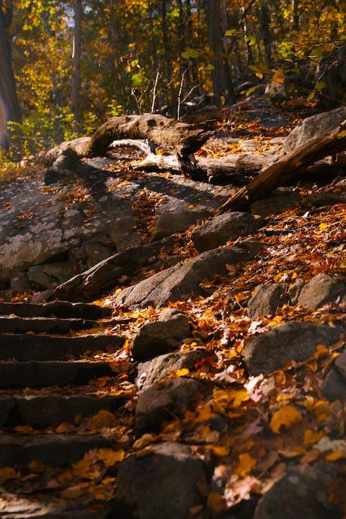 Golden leaves fallen on steps going through trees in woods