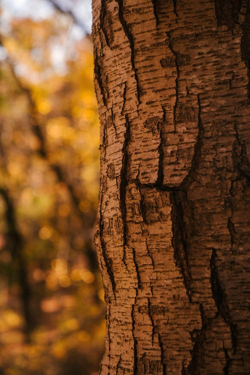 Tree trunk with dry bark growing in golden forest on sunny day
