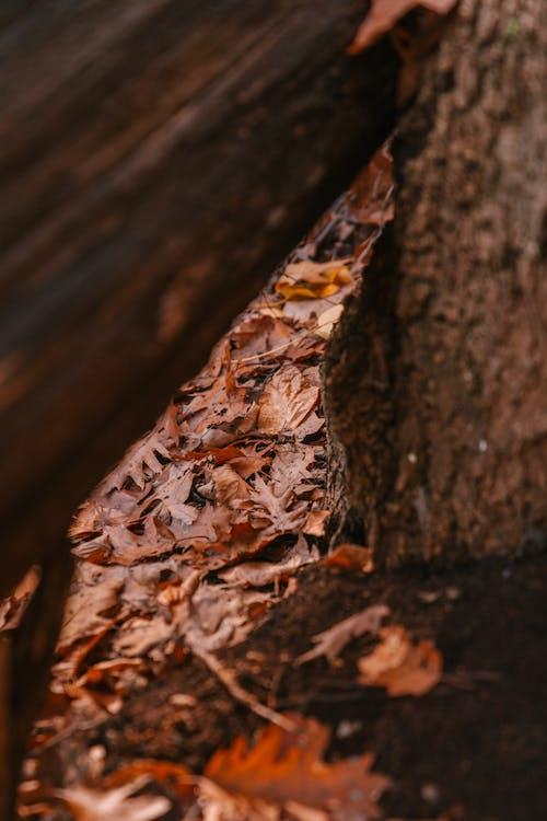 Wet golden leaves fallen near tree in autumn forest